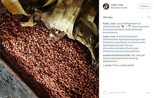 Cacao fermentation at Belmont Estate, Grenada (Instagram hazel_choc)